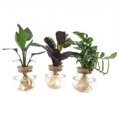 INTENZ groene planten mix in bolglas + klikkurk